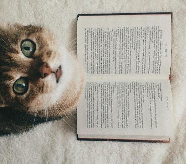 10 книг, которые захватывают с первой фразы
