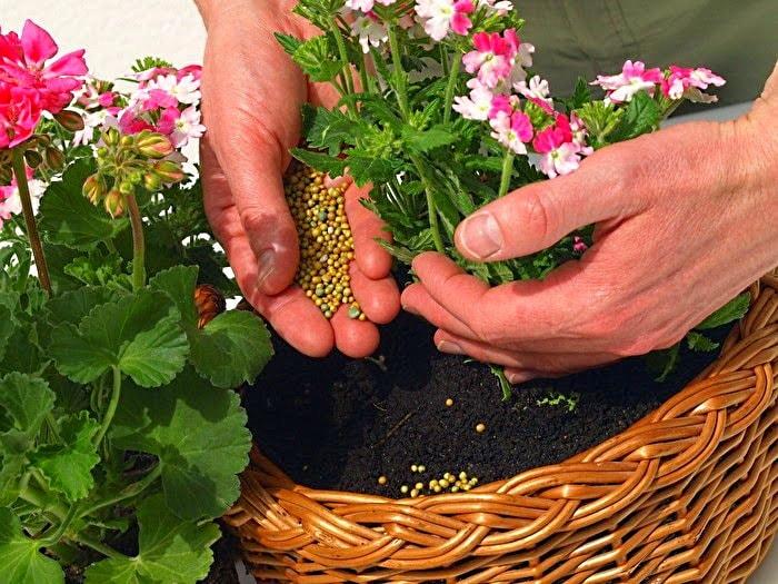 Не знаете, что сделать, чтобы цветы росли лучше? Вот 10 лучших подкормок для комнатных растений