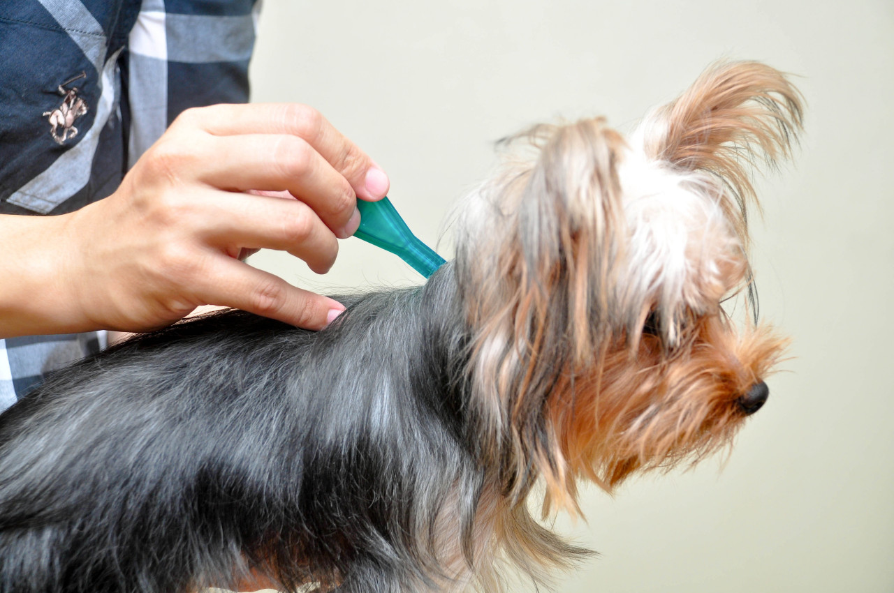 How to remove a Tick from your pet
