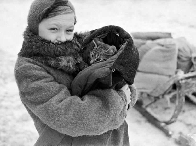 Блокадный Ленинград. Если бы не кот Васька, они умерли бы с голоду