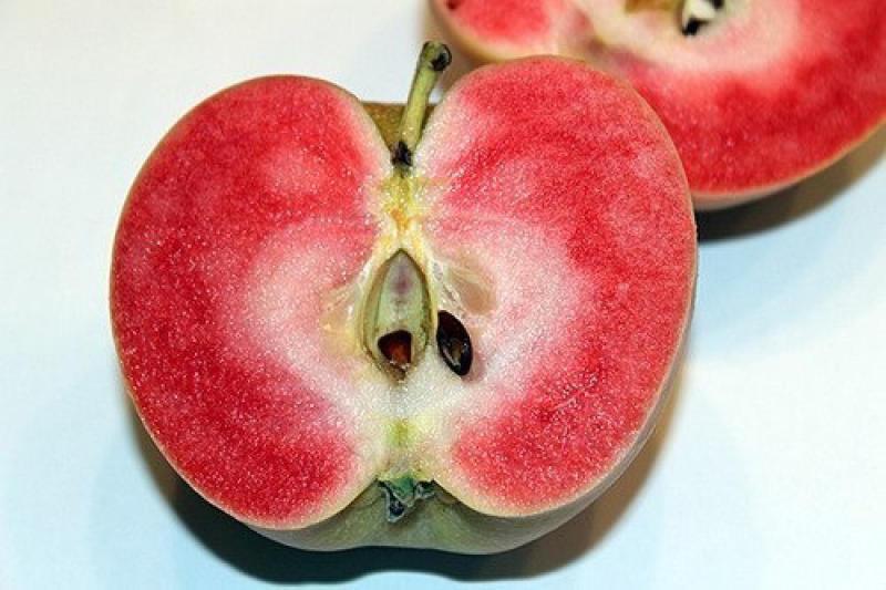 """Какие плоды """"прячутся"""" под словом яблоко"""