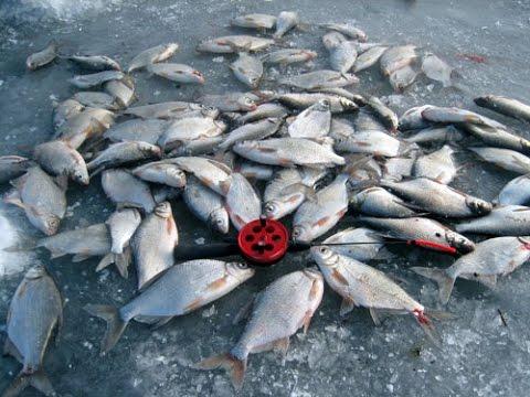Рыбалка зимой по льду в Астраханской области, на р.Ахтуба и р.Бузан.