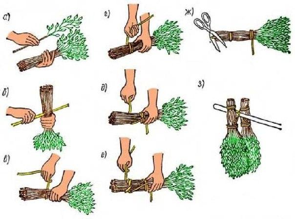 Когда и как заготавливать банные веники