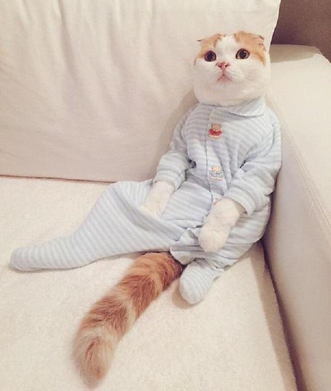 «Приходите на кошачью пижамную вечеринку»: из посольства США пришло забавное сообщение!
