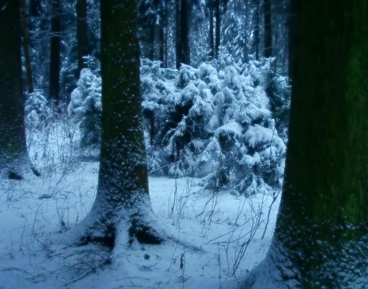 Зимний лес. красота, природа, россия