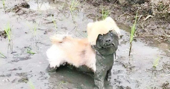 Эти собаки довели своих владельцев до слез! Именно тот случай, когда грязь превыше всего