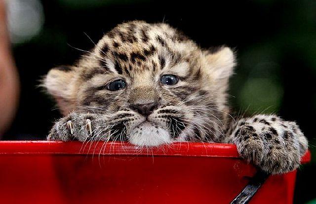 Улыбнитесь. Смешные фото животных