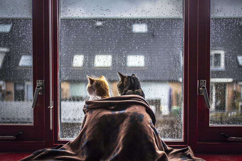 Кошачьи истории в фотографиях