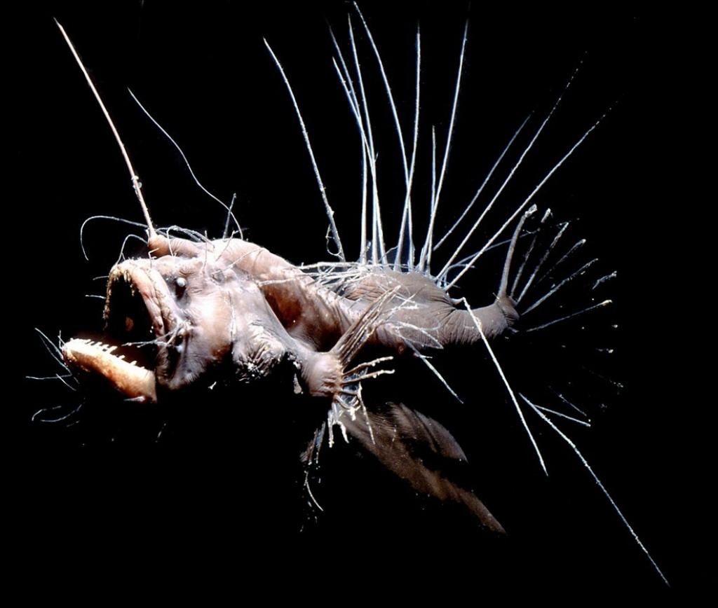 Самые необычные рыбы мирового океана