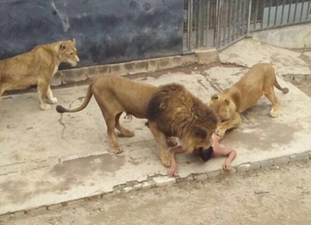 Пытаясь покончить жизнь самоубийством, этот парень прыгнул в вольер со львами...