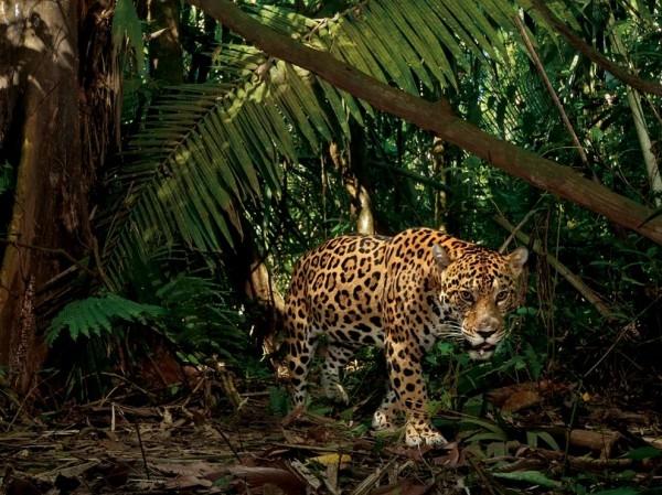 учшие фотографии от National Geographic за февраль 2013 года
