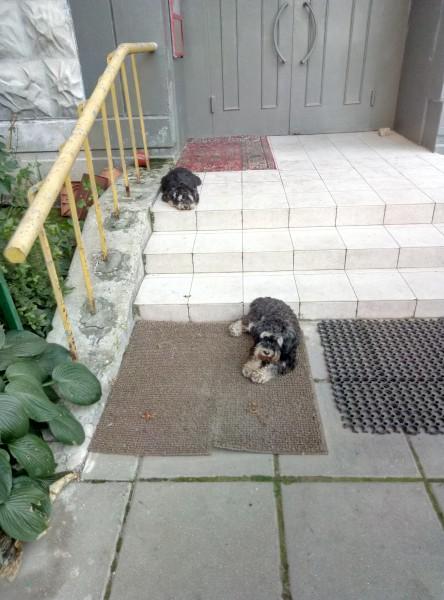 Теперь еще и собаки...