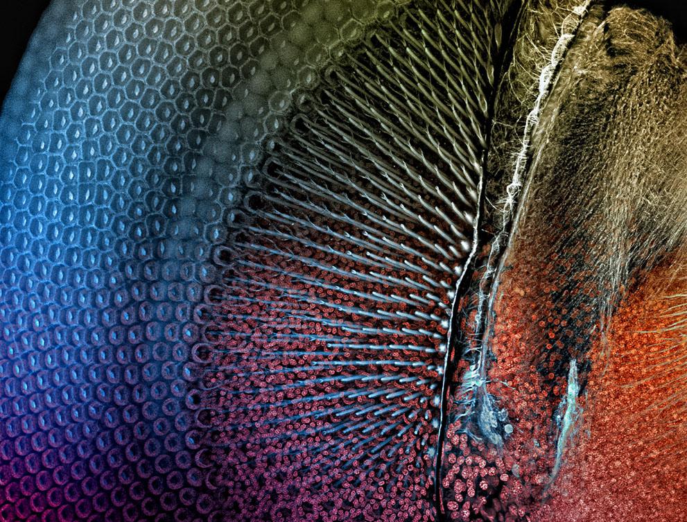 micro17 Под микроскопом