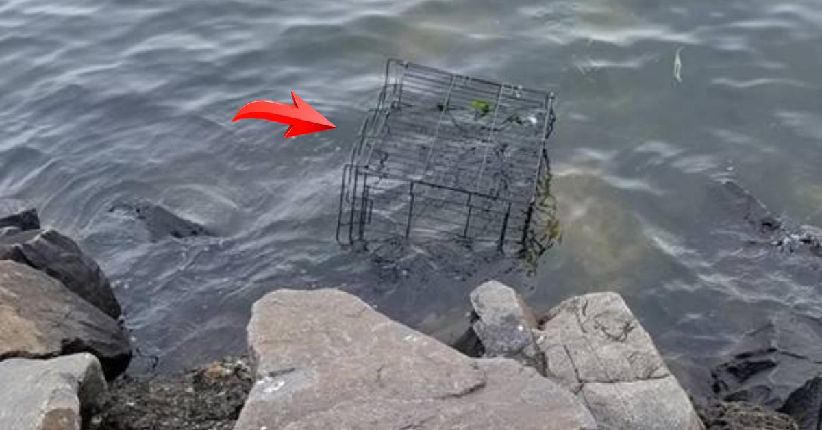 Пёс гулял у реки и вдруг потянул хозяйку к берегу. Под водой, в затонувшей клетке, кто-то двигался