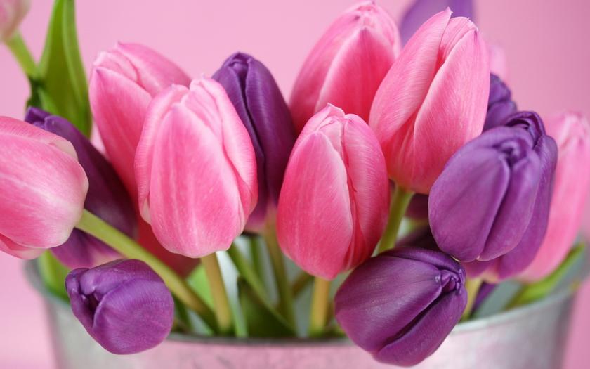 тюльпаны, ведерко, букет