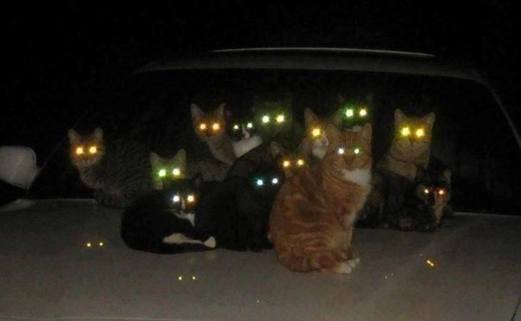 Кошки видят в темноте, как днем?