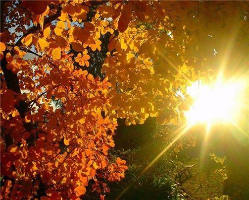 Фотография: Эта осень...  Эта осень прошита дорогами И расчерчена клёнами красными, Эта осень не стонет тревогами, А наполнена яркими красками! Эта осень - не дань уходящему, А весны шальной продолжение... Эта осень - песней манящая И мозаикой стихосложения. Эта осень из солнца соткана, И в небесную синь окрашена... Эта осень - в рассветы окнами Счастья взглядами ошарашена... 01 час.30 мин. 12.09.14.