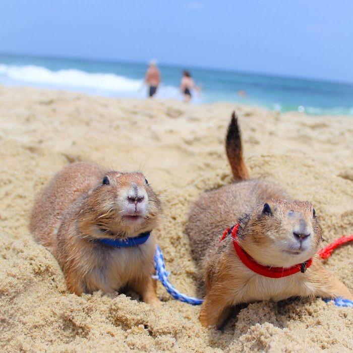 Или в море животные, луговые собачки