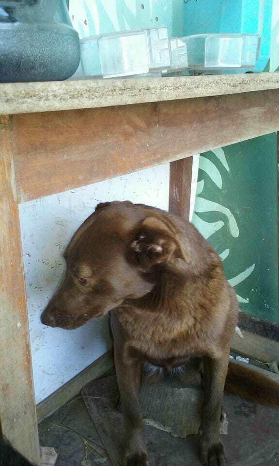 Брошенный пес сидел в приюте 2 года, пока вдруг не почувствовал знакомый запах