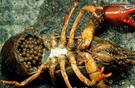 как узнать есть ли в организме паразиты