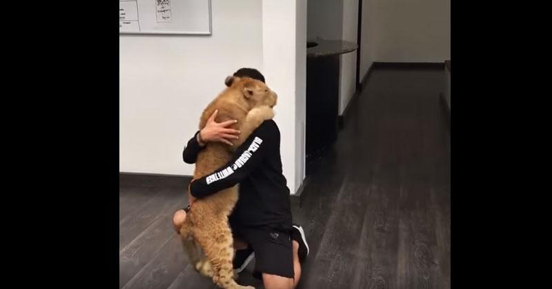 Львенок соскучился по своему другу. Его реакция удивила пользователей Сети!