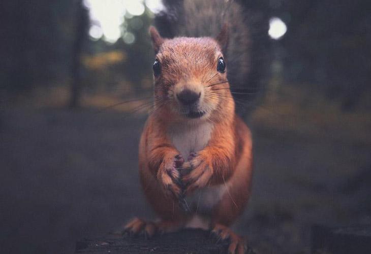 Животные на снимках Konsta Punkka