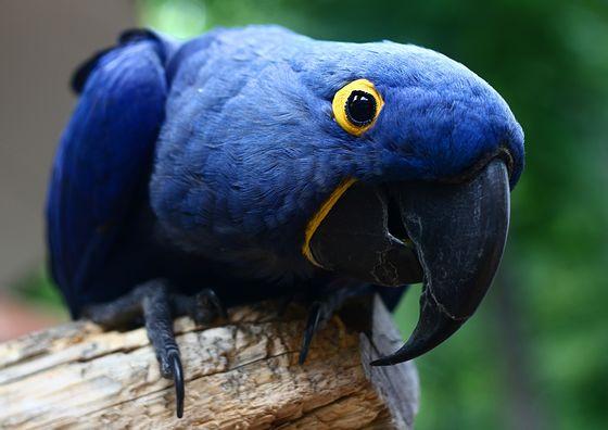 Самая дорогая попугай в мире цена