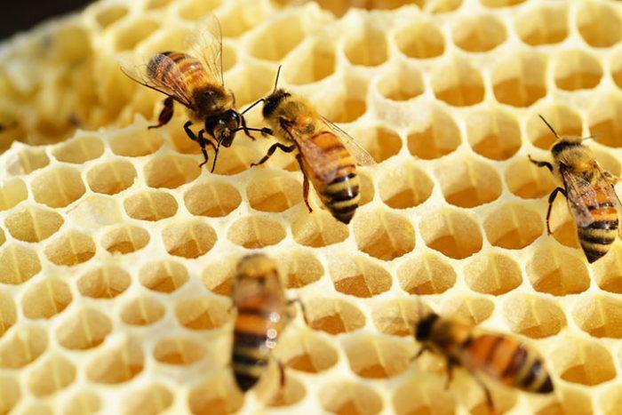 8 изменений, которые произойдут с вашим телом, если вы начнете ежедневно есть мед