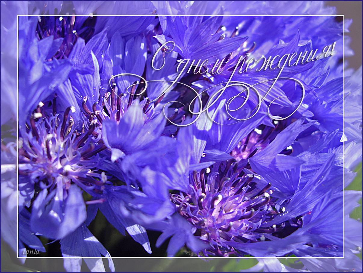 Поздравление маргарите с днем рождения в стихах красивые короткие