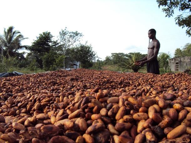 www.climafrica.net-cocoa_prod_ghana