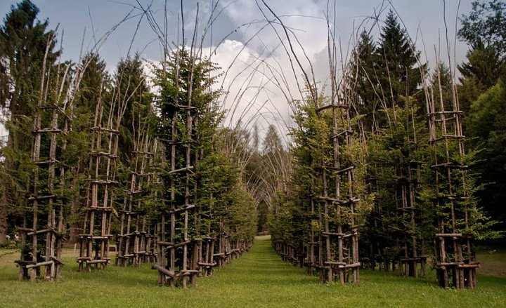 собор из деревьев джулиано маури (9)
