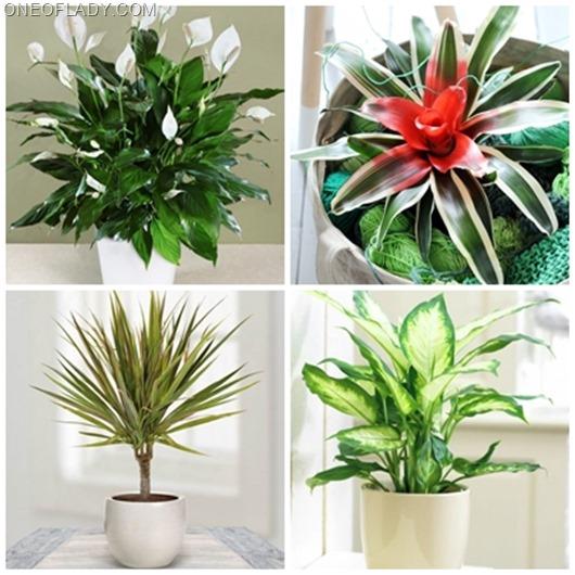 Каким домашним растениям не нужен солнечный свет?