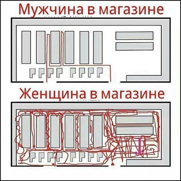 Разница между м и ж