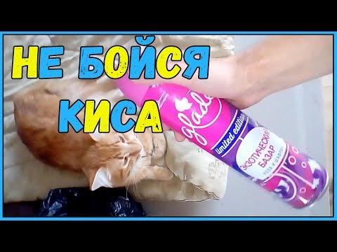 Приколы про котов и собак ТОПовая подборка Кошки и Собаки Не бойся киса!