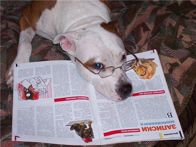 Как обучить собаку грамматике?