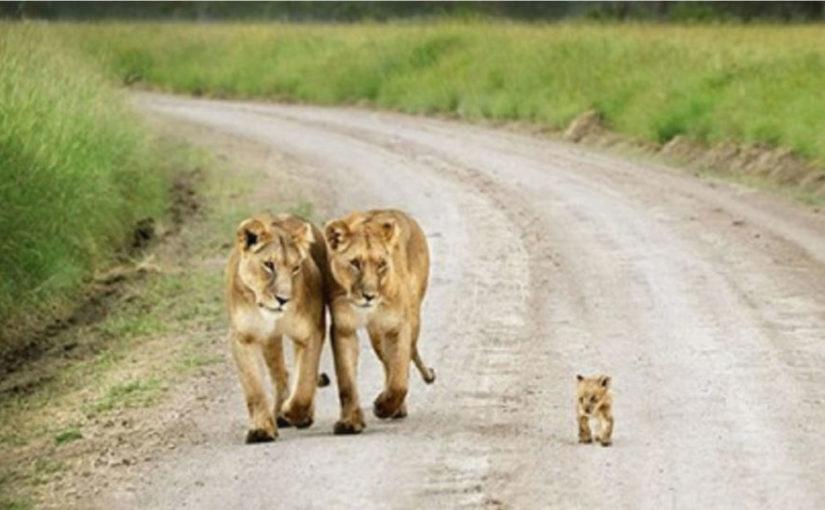 Фото животных с детьми, которые растопят даже самое чёрствое сердце