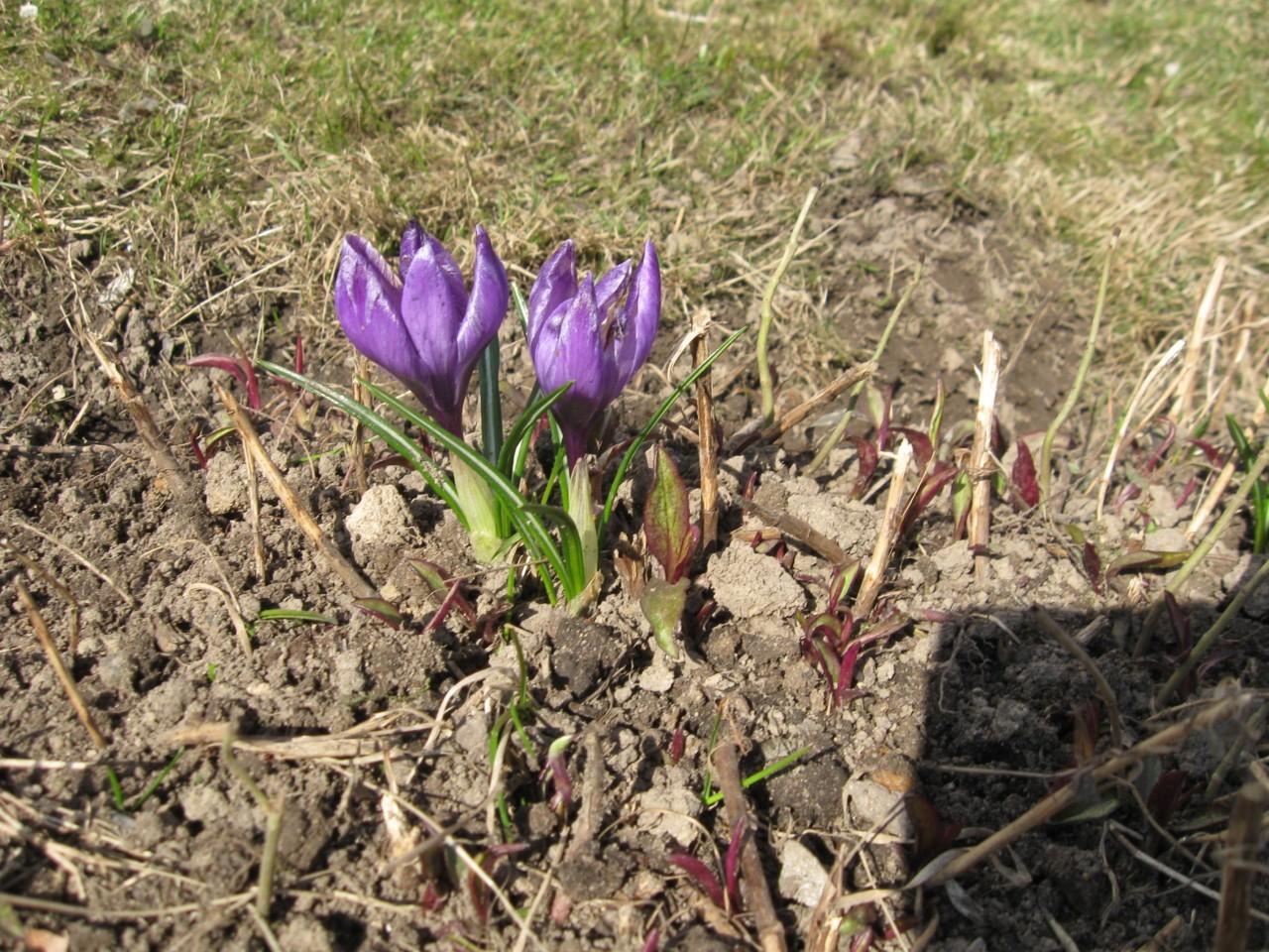 Мгновения нашей жизни:  Эта сумасшедшая весна!