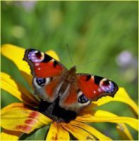 Смысл жизни: путь бабочки