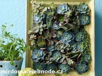 Живые растения в виде картины