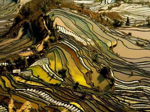 Рисовые террасы в провинции Юньнань