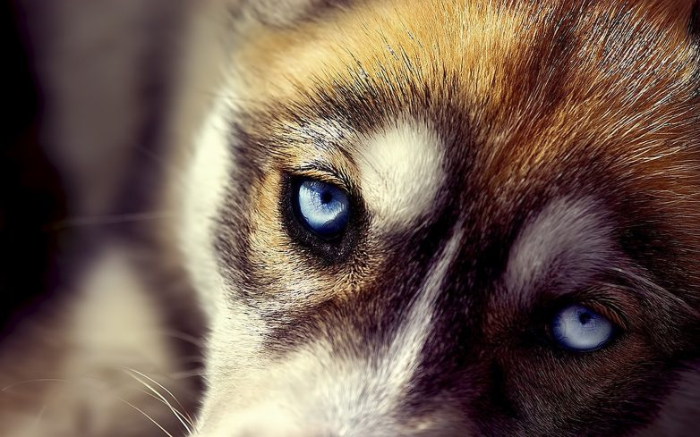 Это надо знать! ИНТЕРЕСНЫЕ факты о собаках - Страница 3 Original