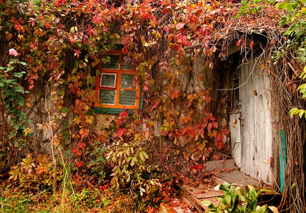 Осенний плющ (13 фото)