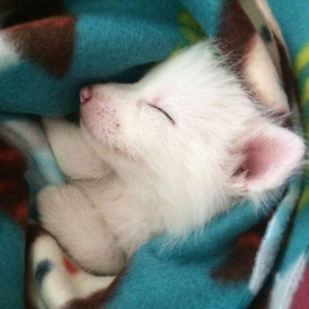 Rylai – самая обаятельная белоснежная лиса в интернете