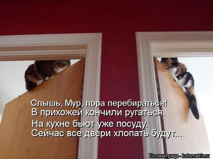 kotomatritsa_Jy (700x523, 184Kb)