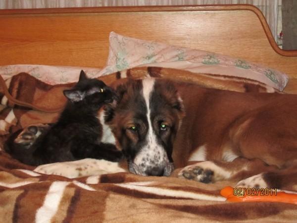 Кот может быть настоящим другом собаке)) История из жизни