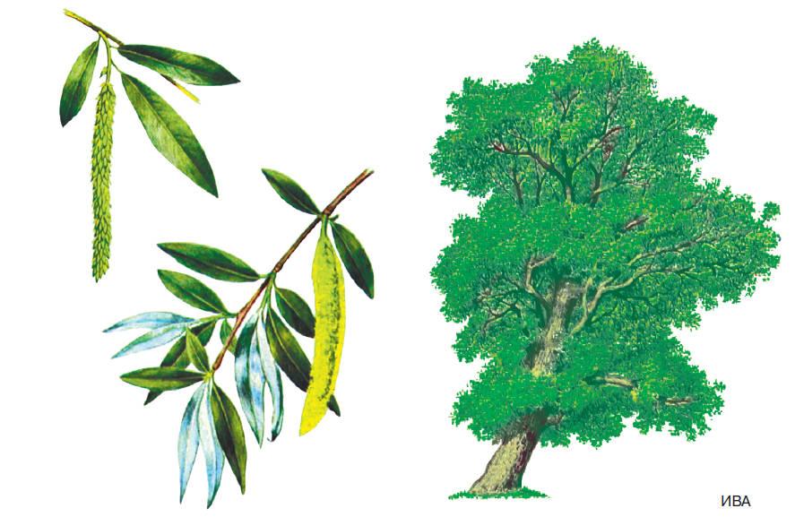 Шаблоны и картинки листьев разных