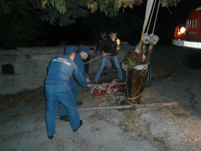 Уникальная операция в Крыму по спасению лошади