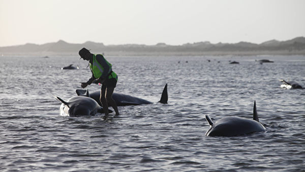 Морские животные ведут себя …