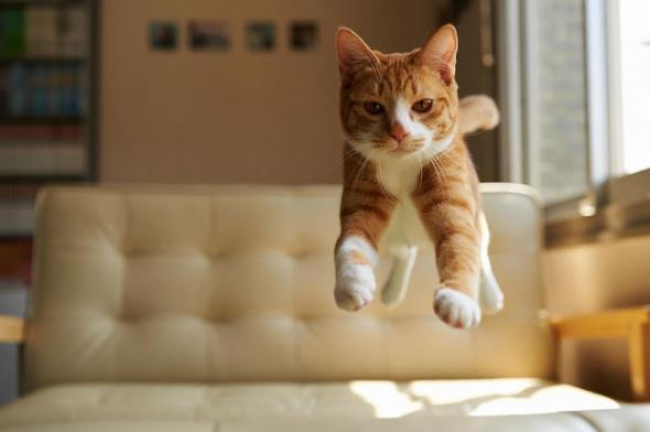 А кто говорил, что коты не умеют летать?