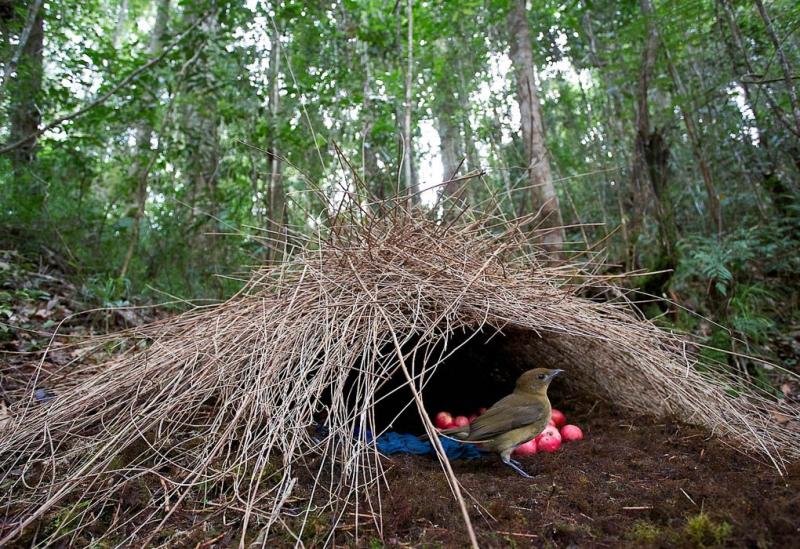 Удивительные птичьи гнезда гнездо